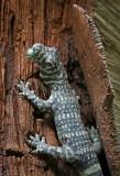 Komodo Dragon figuren