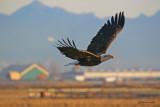eagle-passing-through.jpg