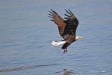eagle-got-it.jpg