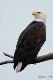 boundary-bay-eagle-5d5.jpg