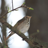 Cottonwood Trail Birding, Spartanburg, SC, 4-4-09