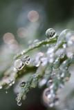 Nature's Ornaments