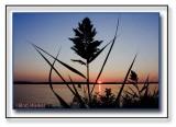 Reeds On The Shores Of Onondaga Lake