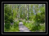 A Spring Walk Through A Flowered Woods