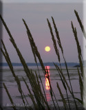 Tranquil Yellow Moon Beams Through The Blades Of Grass
