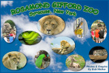Rosamond  Gifford Zoo