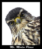 The Birds Of Prey Gallery