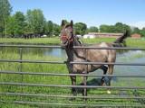Neighbor's Horse-2 - SW Corner of Town