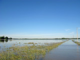 Flooded Corn/Wheat Fields