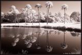 Nine Palms, Kiawah, SC USA