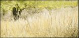 Greenway Tree & Grass
