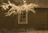 Cloquet Forestry Center: cabin in the woods