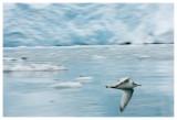 Alaska: May 2009