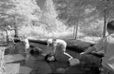 At play Morton Arboretum