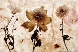 paper ~ flowers