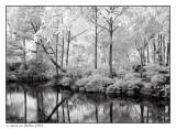Morikami Gardens #1