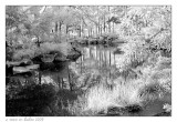 Morikami Gardens #3