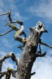 Tree Shot