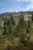 Forest Ending