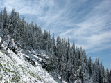Snow Flocked Slope