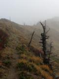 Trail Through Fog