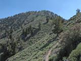 Approaching Summit Area