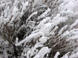Hoar Frost Brush