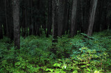Flashed Forest