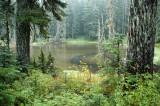 Tarn/Lake