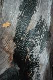 Charred Log and Leaf