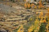 Tundra Grasses