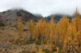 Larches and Ingalls Peak