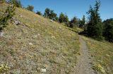 Flowery Trail