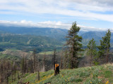 Wenatchee River Valley from Tibbetts