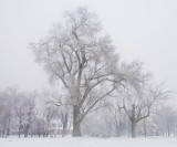 House in winter trees