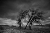 Trees in the storm