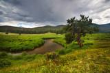 Creek through the meadow