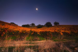 Napa Valley moon night
