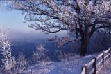 12 -- Winter view