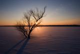 Sun & tree