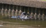 6-13-10-1754-NE-canal-.jpg