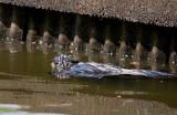 6-13-10-1755-NE-canal.jpg