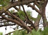 10-25-10 0861 pair new nest .jpg