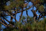 11-13-10 4051 new tree.jpg