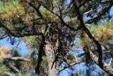11-2810 new tree 7242.jpg
