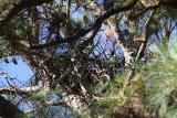 11-28-10 new tree 7233.jpg