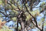 12-19-10 8666 nest.jpg