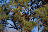 1-3-11 0647 wheres the eagle.jpg