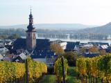 Vineyard on the Bank of Rhine