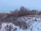 Deer Pasture 1 with Moose Dec 24 20008.jpg